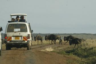 Decagon Safaris: Best of Kenya