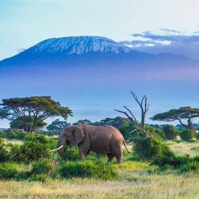 Kijeda tours & safaris